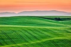 Moravia rolling landscape on sunrise Royalty Free Stock Photo