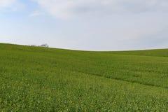 Moravian绿色辗压风景 一些反弹严格晴朗那里不是的蓝色云彩日由于域重点充分的绿色横向小的移动工厂显示天空是麦子白色风 Moravian托斯卡纳,南摩拉维亚,捷克,欧洲 免版税库存照片