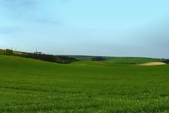 Moravian绿色辗压风景 一些反弹严格晴朗那里不是的蓝色云彩日由于域重点充分的绿色横向小的移动工厂显示天空是麦子白色风 Moravian托斯卡纳,南摩拉维亚,捷克,欧洲 库存照片