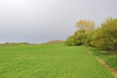 Moravian绿色辗压风景 一些反弹严格晴朗那里不是的蓝色云彩日由于域重点充分的绿色横向小的移动工厂显示天空是麦子白色风 Moravian托斯卡纳,南摩拉维亚,捷克,欧洲 免版税图库摄影