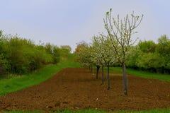 Moravian风景背景  开花的结构树 横向春天 Moravian托斯卡纳,南摩拉维亚,捷克 免版税库存照片