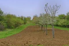 Moravian风景背景  开花的结构树 横向春天 Moravian托斯卡纳,南摩拉维亚,捷克 图库摄影