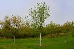 Moravian风景背景  开花的结构树 横向春天 Moravian托斯卡纳,南摩拉维亚,捷克 免版税图库摄影