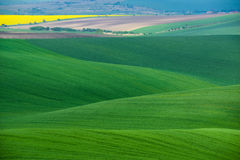 Moravian绿色与麦田的辗压风景、强奸和小村庄 在绿色的自然季节性农村风景 免版税库存图片