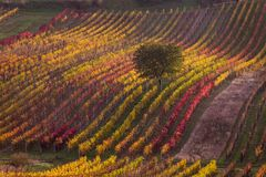 Moravian autumn vineyards. Czech Republic Stock Images