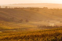Moravian autumn vineyards. Czech Republic Royalty Free Stock Images