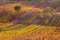 Moravian autumn vineyards Stock Photo