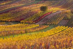 Moravian autumn vineyards. Czech Republic royalty free stock photos
