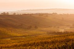 Moravian autumn vineyards Stock Images