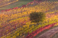 Moravian autumn vineyards Royalty Free Stock Image