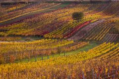 Moravian autumn vineyards. Czech Republic Stock Photos
