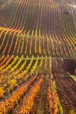 Moravian autumn vineyards. Czech Republic Royalty Free Stock Photo
