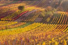 Moravian autumn vineyards Royalty Free Stock Images