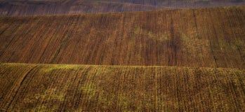 Moravian fält - ett område kallade Moravianen Tuscany, Tjeckien, Europa Royaltyfri Fotografi