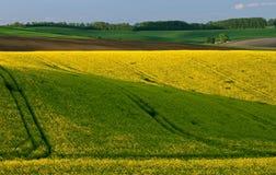 Moravian Felder Lizenzfreies Stockfoto