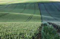 Moravian Felder Lizenzfreie Stockbilder