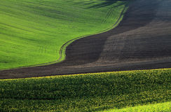 Moravian Felder Stockfotografie