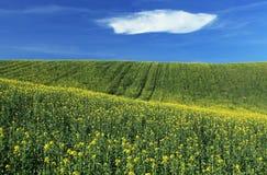 Moravian Felder Lizenzfreie Stockfotografie
