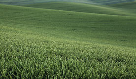 Moravian Fields Royalty Free Stock Photo