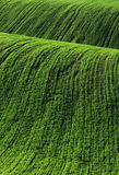 Moravian Fields Stock Image