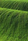 Moravian Fields. Spring in the fields near Brno in Moravia Czech Republic Stock Image