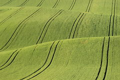 Moravian fields. A carpet of field in Moravian Tuscany Stock Photo