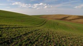 Moravian Fields II Royalty Free Stock Image