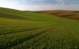 Moravian Fields IV. Spring in the fields near Brno in Moravia Royalty Free Stock Photography