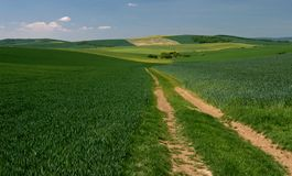 Moravian Fields IX. Spring in the fields near Brno in Moravia Czech Republic Royalty Free Stock Photography