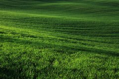 Moravian Fields Royalty Free Stock Photo