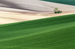 Moravian Fields Stock Photo