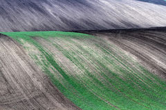 Moravian Fields Stock Photography
