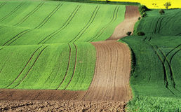 Moravian Fields Royalty Free Stock Image