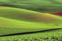 Moravian Fields Royalty Free Stock Photography