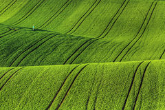 Moravian Fields Stock Images