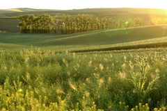 Moravian fields. Sunset on fields in Moravian Tuscany Royalty Free Stock Photo