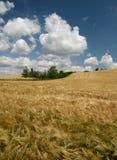Moravian Fields XII. Summer in the fields near Brno in Moravia Czech Republic Stock Photo