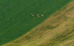 Moravian-Landschaft mit dem Rogen Lizenzfreies Stockbild