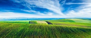 Moravian rollend landschap met bomen stock foto