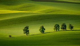 Moravian rolling hills in the summer time with meadow fields and old trees