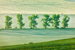 Moravian rolling landscape with trees in early Royalty Free Stock Image