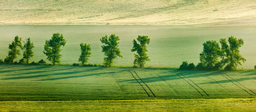 Moravian rolling landscape with trees in early Stock Photo