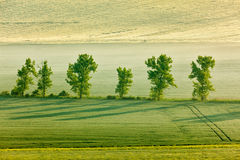 Moravian rolling landscape with trees in morning Royalty Free Stock Photography