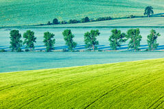 Moravian rolling landscape with trees in morning Stock Photography