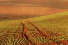 Moravian sul coloca, campos de República Checa, montes moravian Foto de Stock Royalty Free