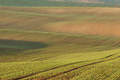 Moravian sul coloca, campos de República Checa, montes moravian Fotos de Stock Royalty Free