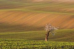 Moravian sul coloca, campos de República Checa, montes moravian Fotografia de Stock