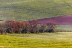 Moravian sul coloca, campos de República Checa, montes moravian Fotografia de Stock Royalty Free
