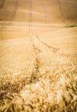 Moravian Toscana Kyjov fotografía de archivo
