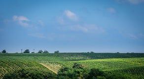 Moravian Toscana Kyjov Imagenes de archivo